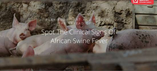 The Clinical Signs of African Swine Fever